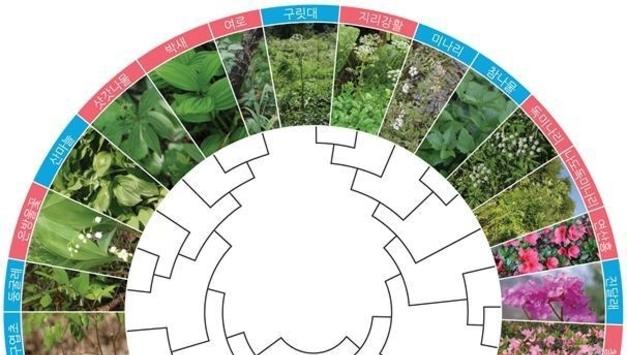 독초 15종, 유전자신분증으로 산나물과 구분 가능해져