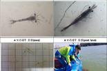 부산시, 자체생산한 보리새우 약 755만 마리 주변 해역에 방류