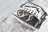 서울시, 반려동물에 의한 화재 전년도 전체대비 163 증가
