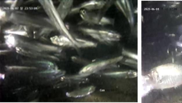 낙동강 하굿둑 개방 3차 실험 결과, 생태 복원 가능성  보여