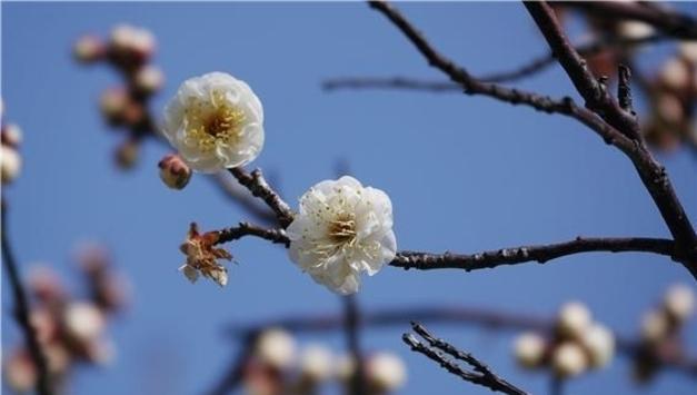 봄이 오는 소리…국립공원에서 봄바람 봄꽃소식