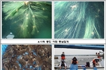 부산시, 수산자원 조성 위해 낙동강 유역에 어린 동남참게 20만 마리 방류